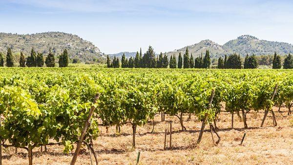 cours vin sud france