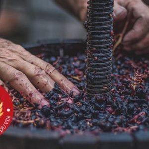 CFV – Certificat Les Fondamentaux Du Vin (à Distance)