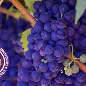 CCAVF – Certificat De Connaissances Approfondies Des Vignobles De France (en Présentiel)
