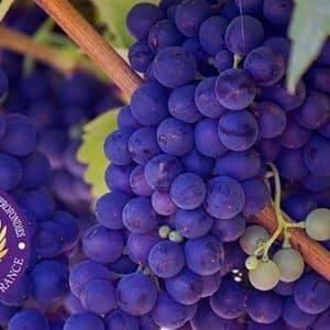 CCAVF – Certificat De Connaissances Approfondies Des Vignobles De France (à Distance)