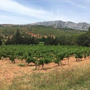 Vino Chateau / Visite Au Domaine Viticole Aix-en-Provence